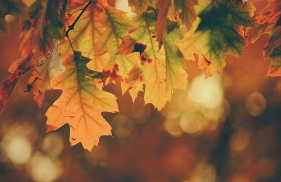 timothy-eberly-Fall_Leaves
