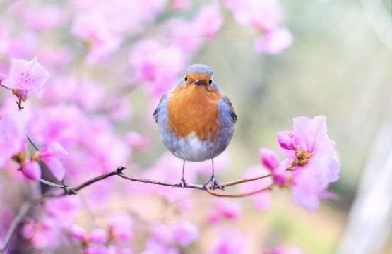 Spring_pixabay-414181