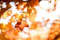 Fall_matt-uuBBew6g2jM-unsplash